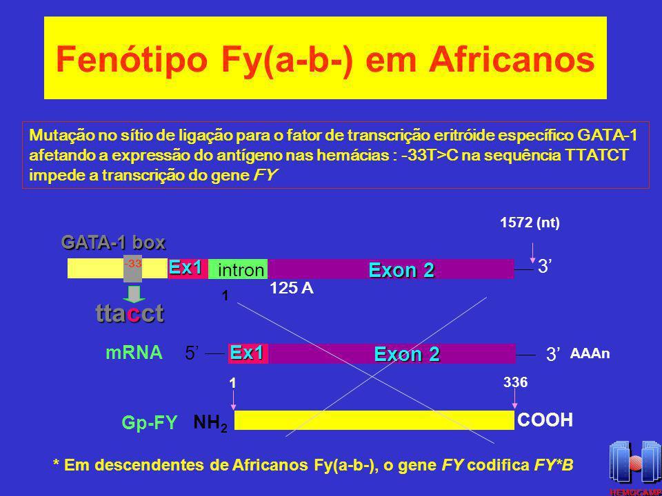 Fenótipo Fy(a-b-) em Africanos