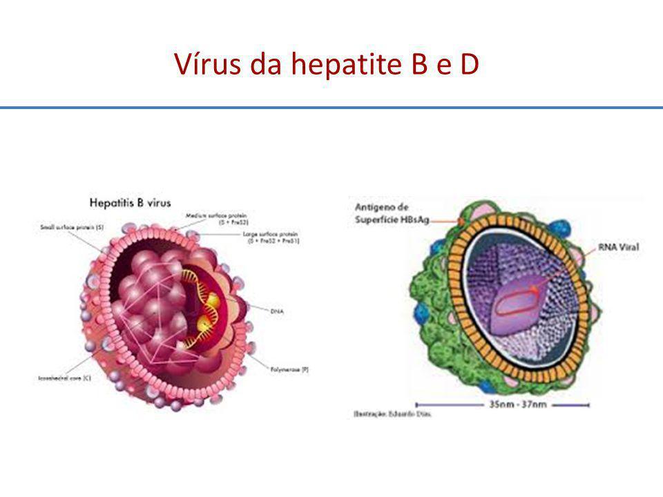 Vírus da hepatite B e D