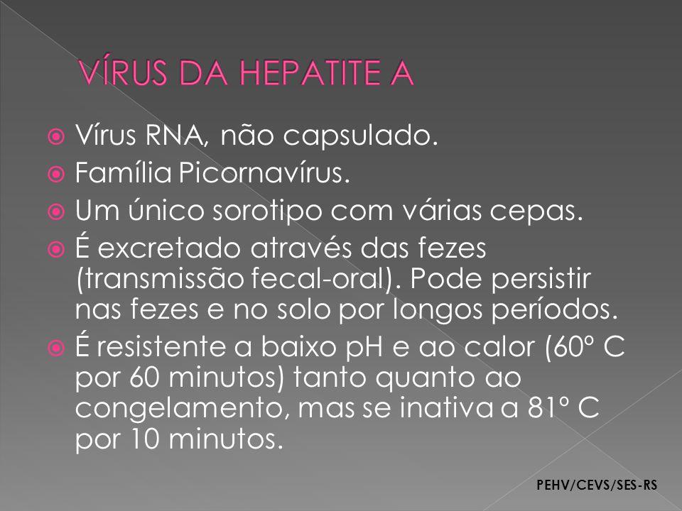 VÍRUS DA HEPATITE A Vírus RNA, não capsulado. Família Picornavírus.
