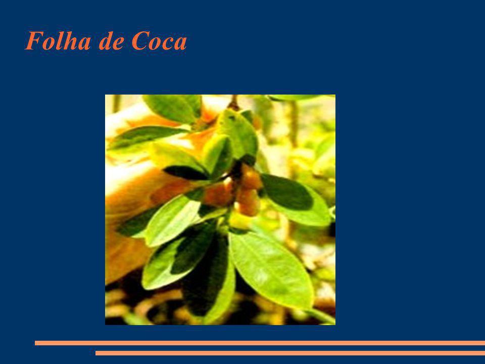 Folha de Coca