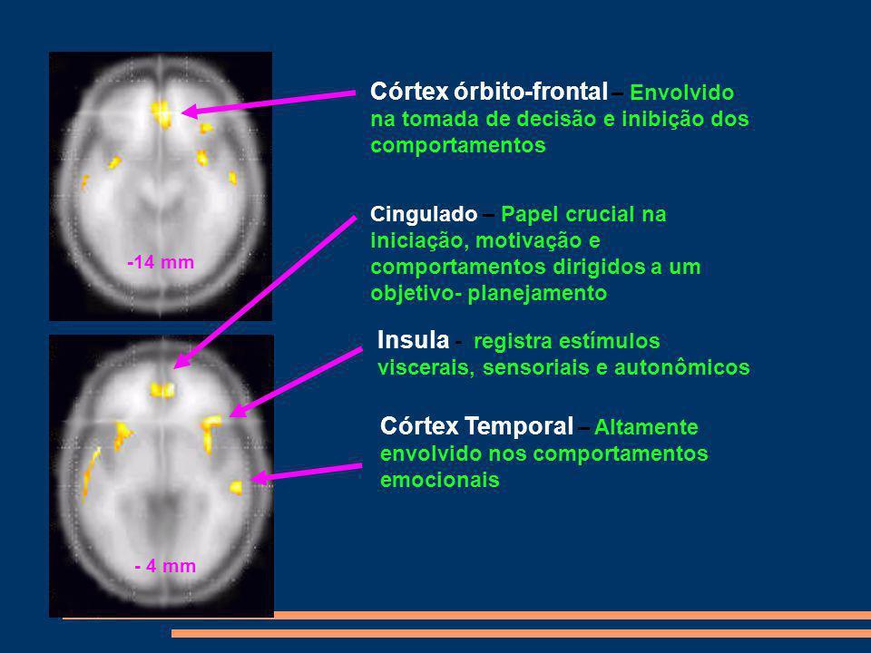 Insula - registra estímulos viscerais, sensoriais e autonômicos