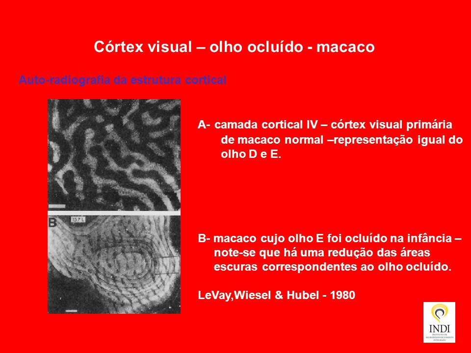 Córtex visual – olho ocluído - macaco