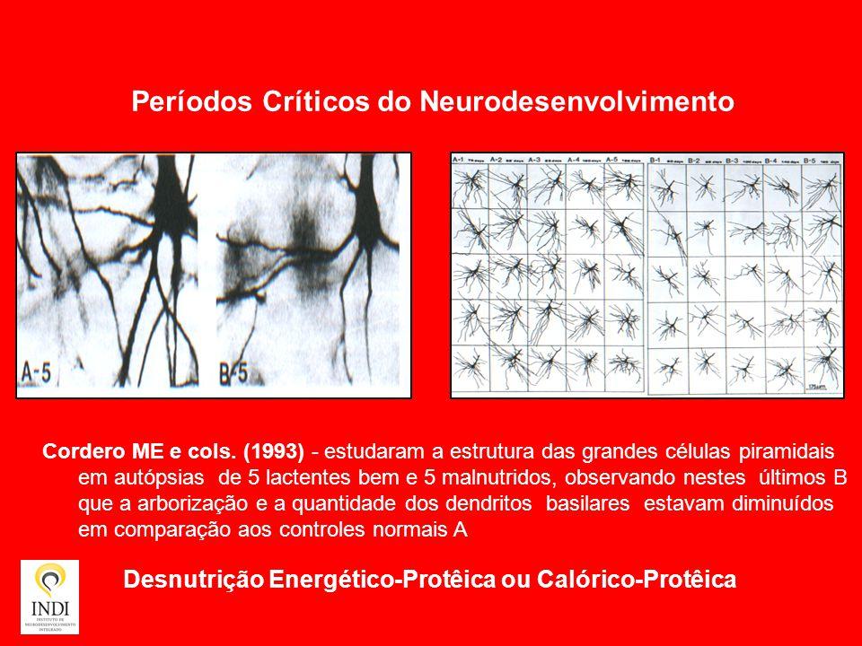 Períodos Críticos do Neurodesenvolvimento
