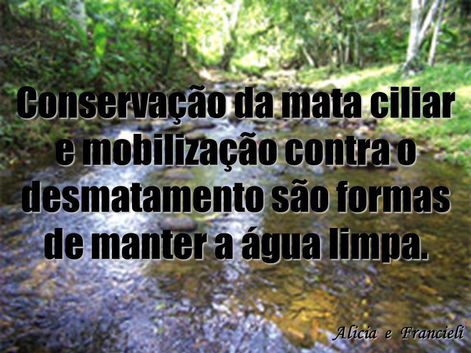 Conservação da mata ciliar e mobilização contra o desmatamento são formas de manter a água limpa.