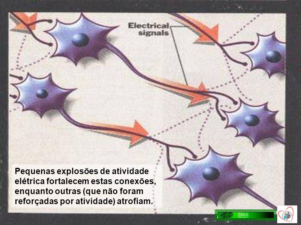 Pequenas explosões de atividade elétrica fortalecem estas conexões, enquanto outras (que não foram reforçadas por atividade) atrofiam.