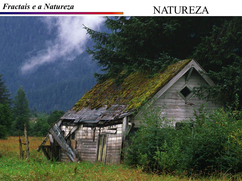 Fractais e a Natureza NATUREZA