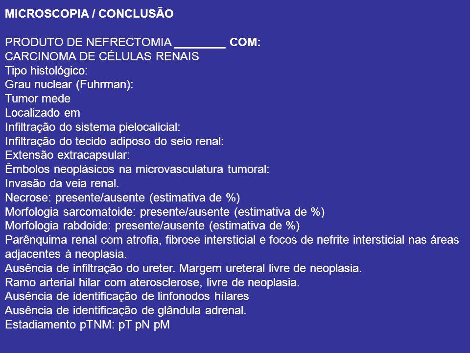 MICROSCOPIA / CONCLUSÃO
