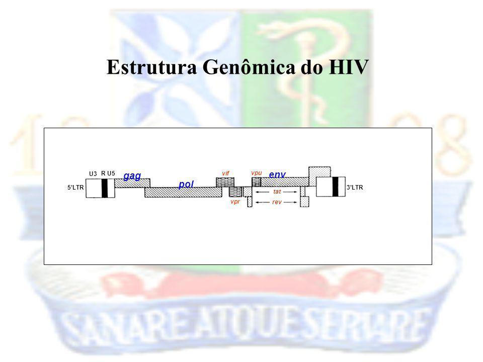 Estrutura Genômica do HIV