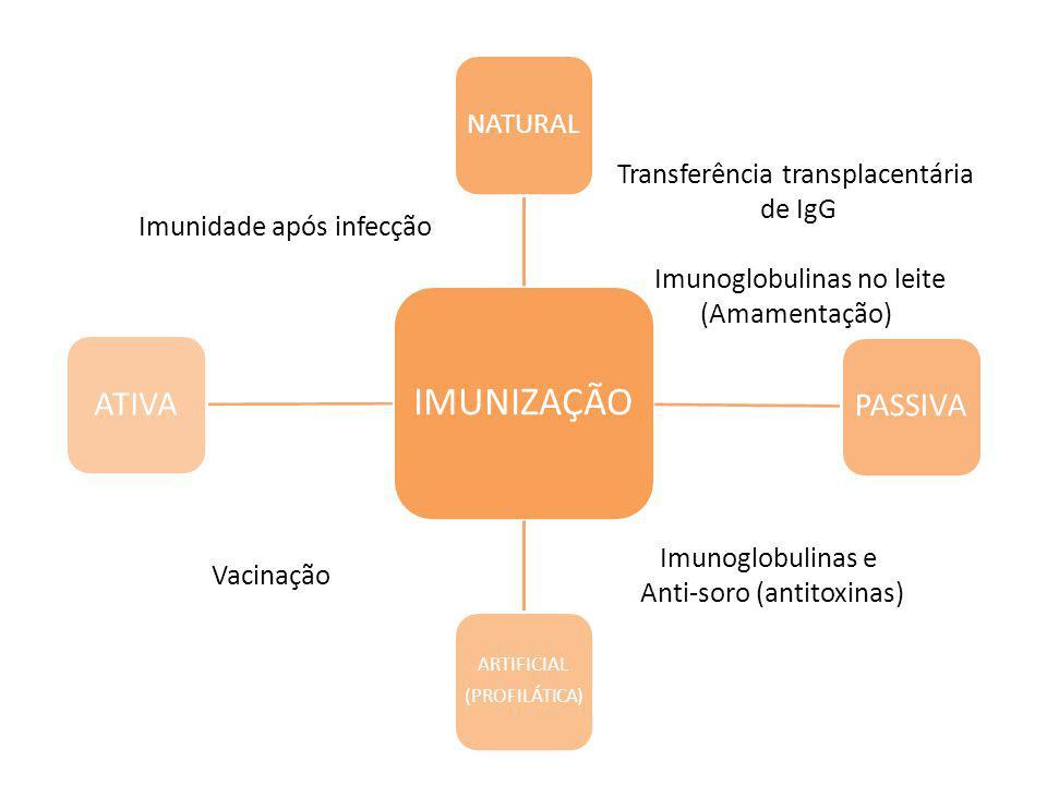 ATIVA Transferência transplacentária de IgG Imunoglobulinas no leite