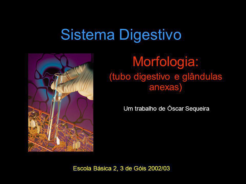 Morfologia: (tubo digestivo e glândulas anexas)