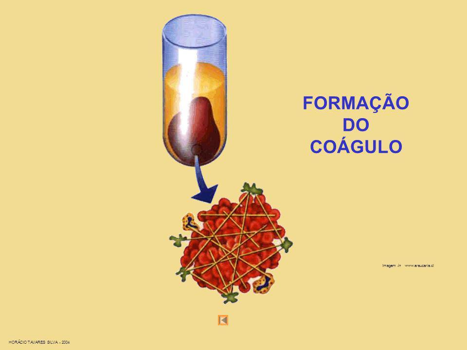 FORMAÇÃO DO COÁGULO Imagem in www.araucaria.cl
