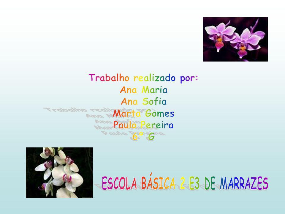 Trabalho realizado por: ESCOLA BÁSICA 2 E3 DE MARRAZES