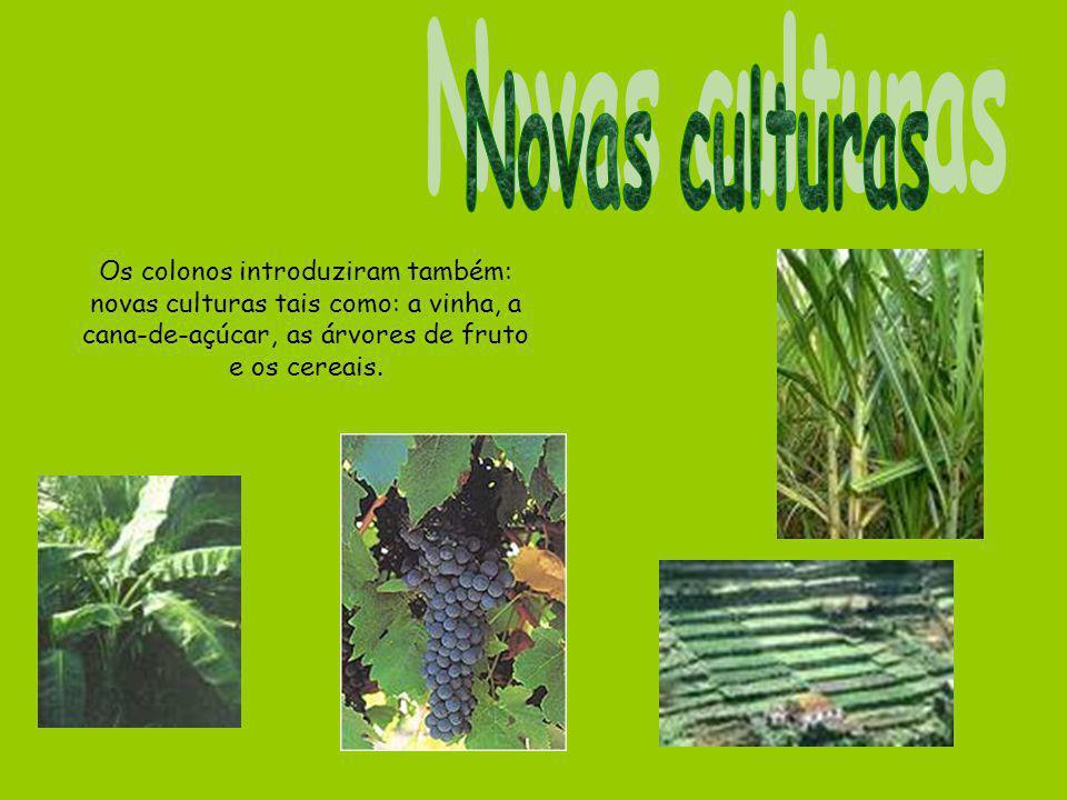 Novas culturas Os colonos introduziram também: novas culturas tais como: a vinha, a cana-de-açúcar, as árvores de fruto e os cereais.