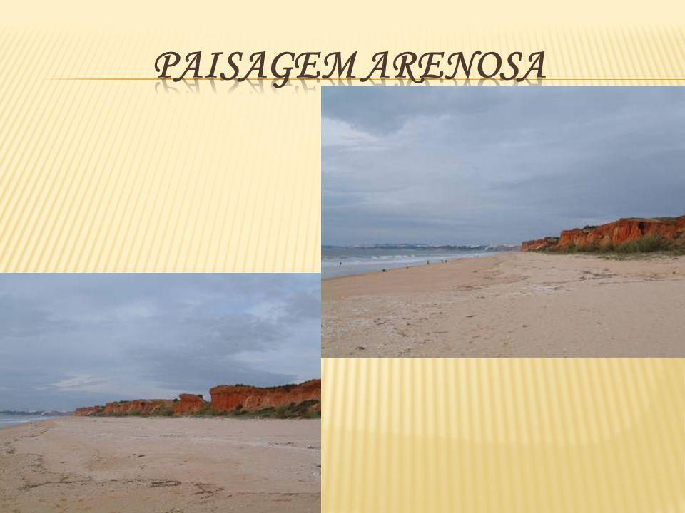 Paisagem Arenosa