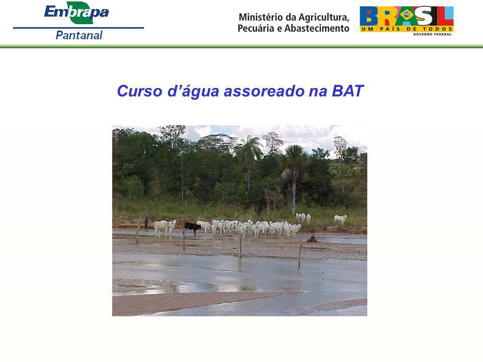 Curso d'água assoreado na BAT