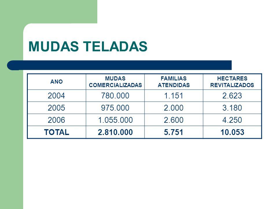 MUDAS COMERCIALIZADAS HECTARES REVITALIZADOS