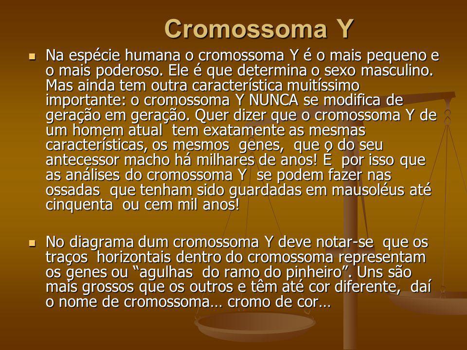 Cromossoma Y
