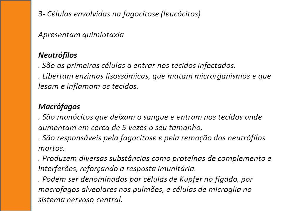 3- Células envolvidas na fagocitose (leucócitos) Apresentam quimiotaxia Neutrófilos .