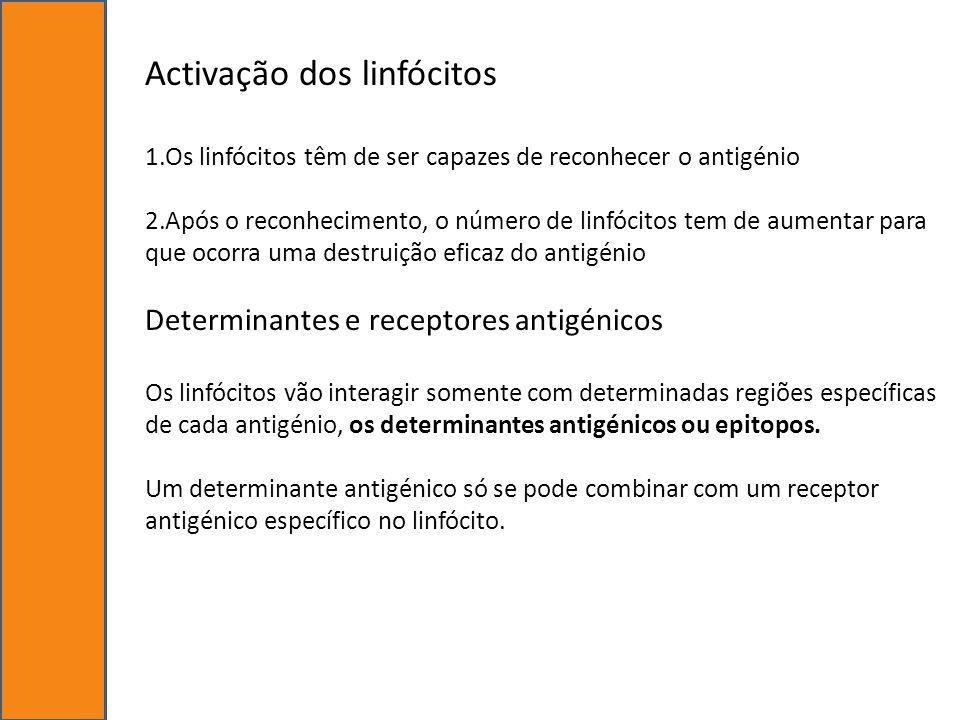 Activação dos linfócitos
