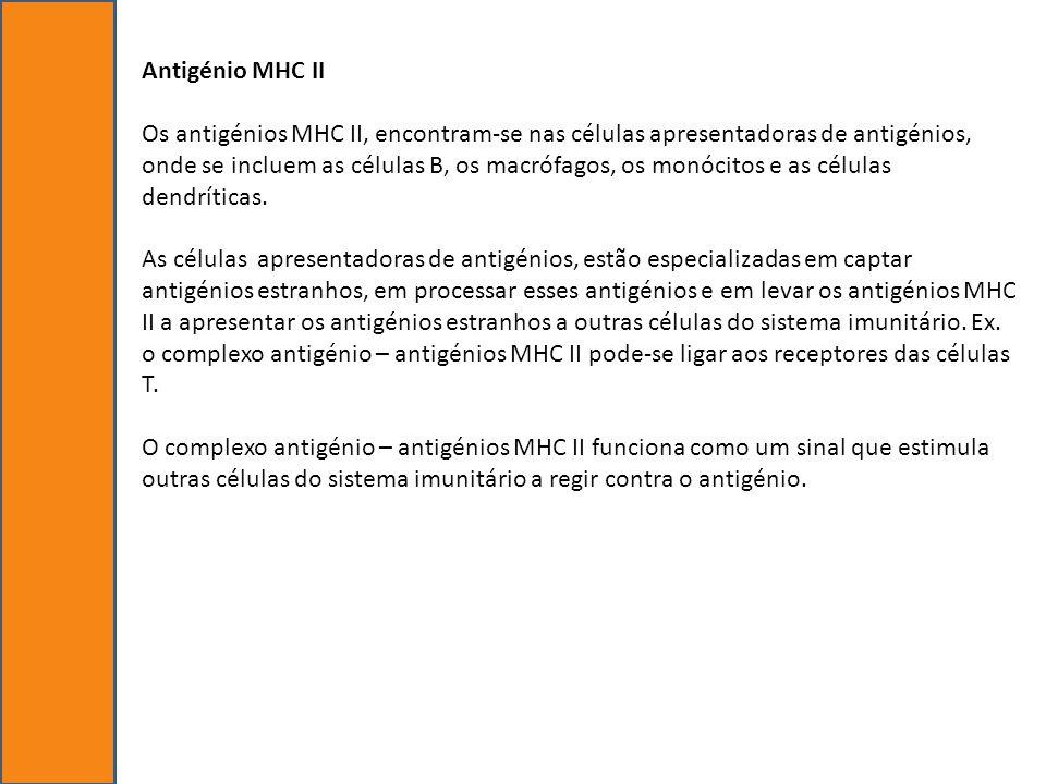 Antigénio MHC II