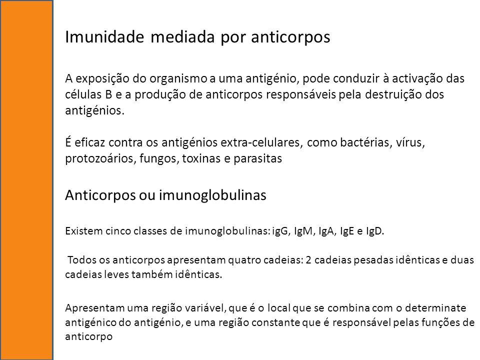 Imunidade mediada por anticorpos