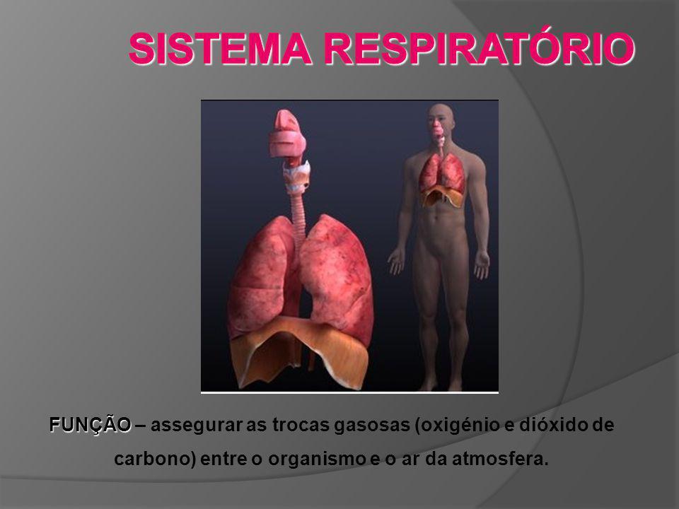 SISTEMA RESPIRATÓRIO FUNÇÃO – assegurar as trocas gasosas (oxigénio e dióxido de carbono) entre o organismo e o ar da atmosfera.