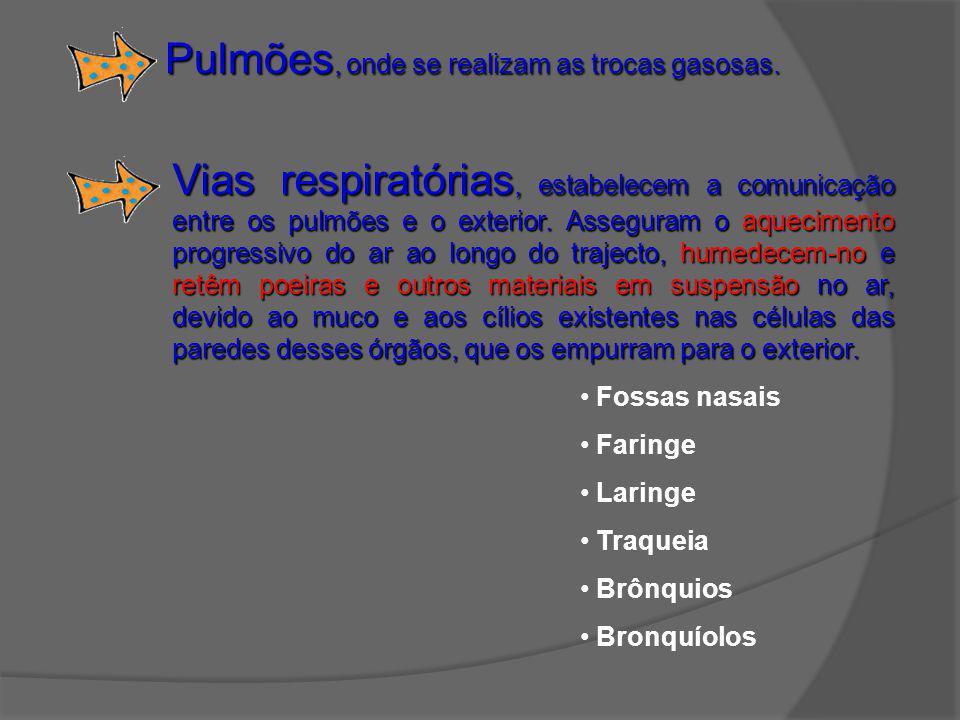 Pulmões, onde se realizam as trocas gasosas.