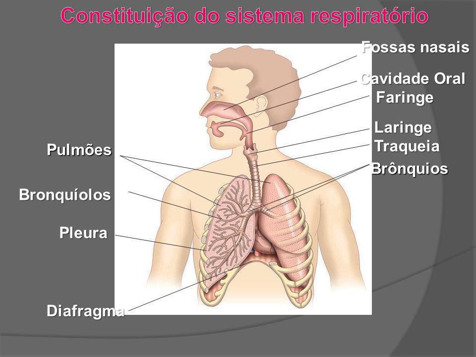 Constituição do sistema respiratório