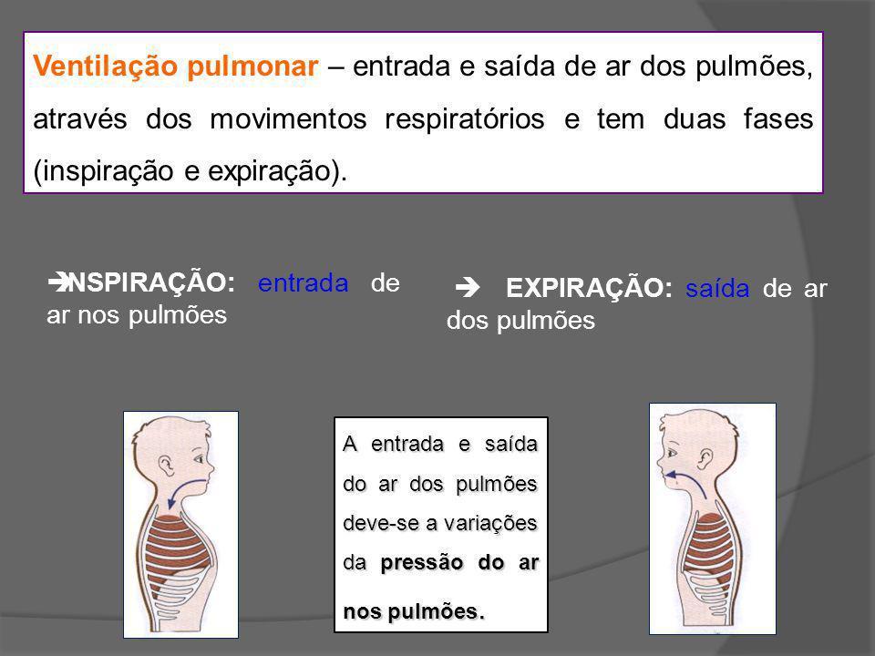 Ventilação pulmonar – entrada e saída de ar dos pulmões, através dos movimentos respiratórios e tem duas fases (inspiração e expiração).