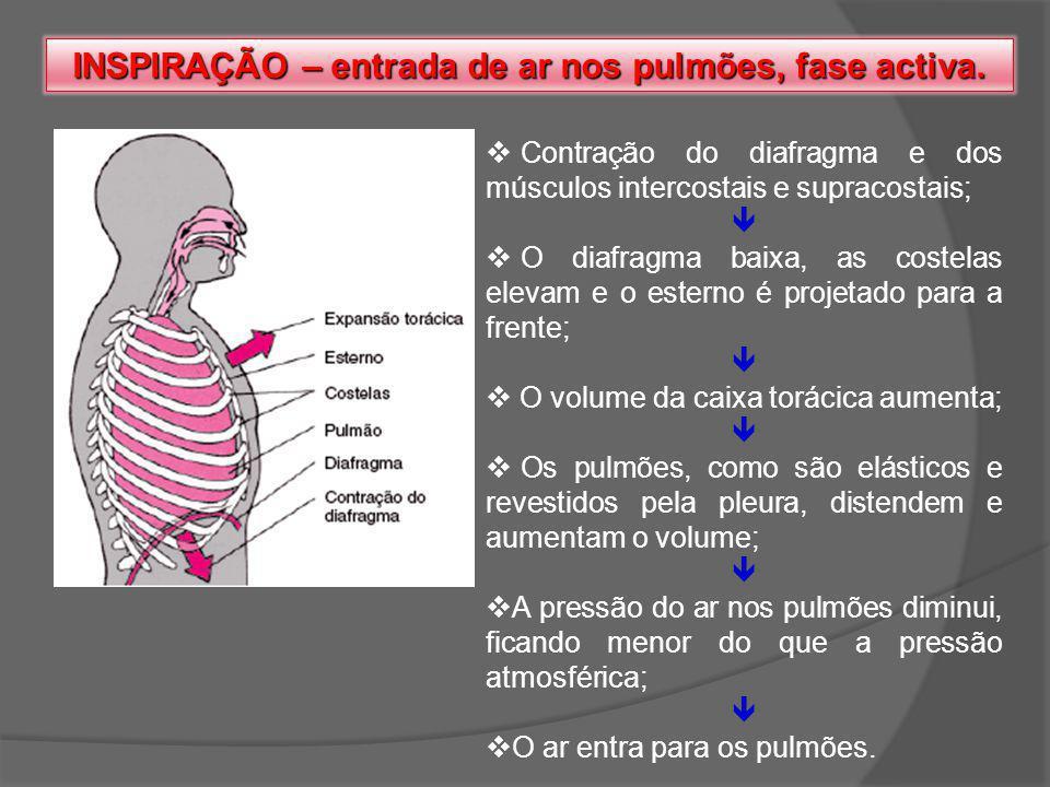 INSPIRAÇÃO – entrada de ar nos pulmões, fase activa.