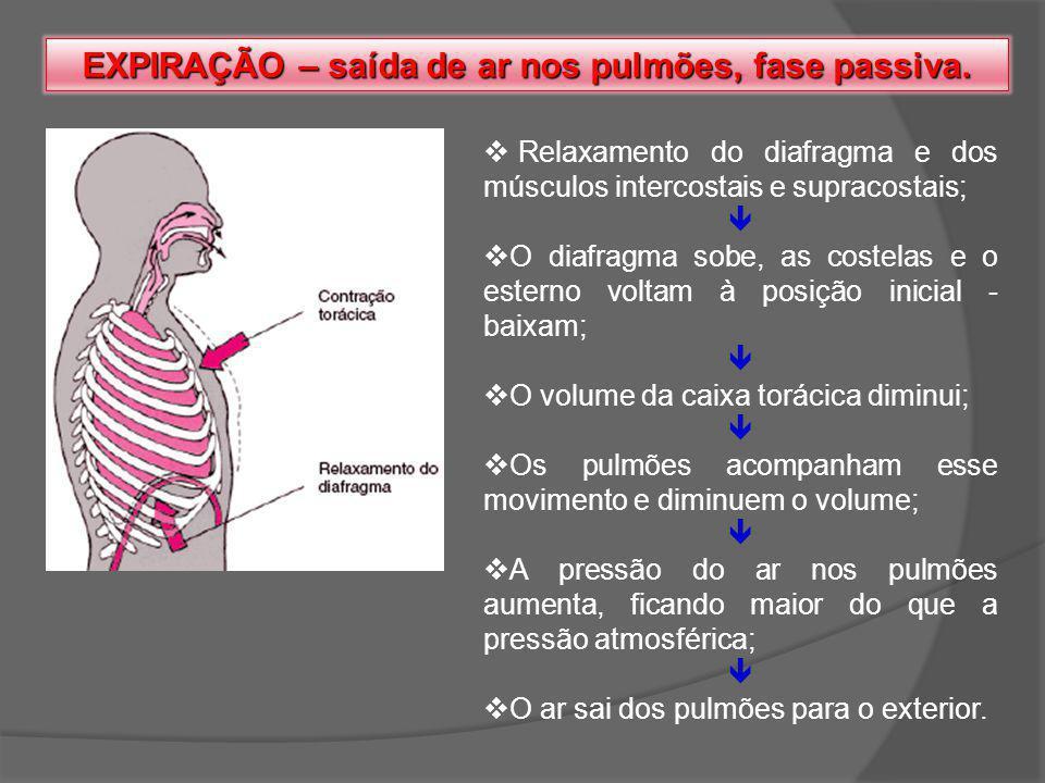 EXPIRAÇÃO – saída de ar nos pulmões, fase passiva.