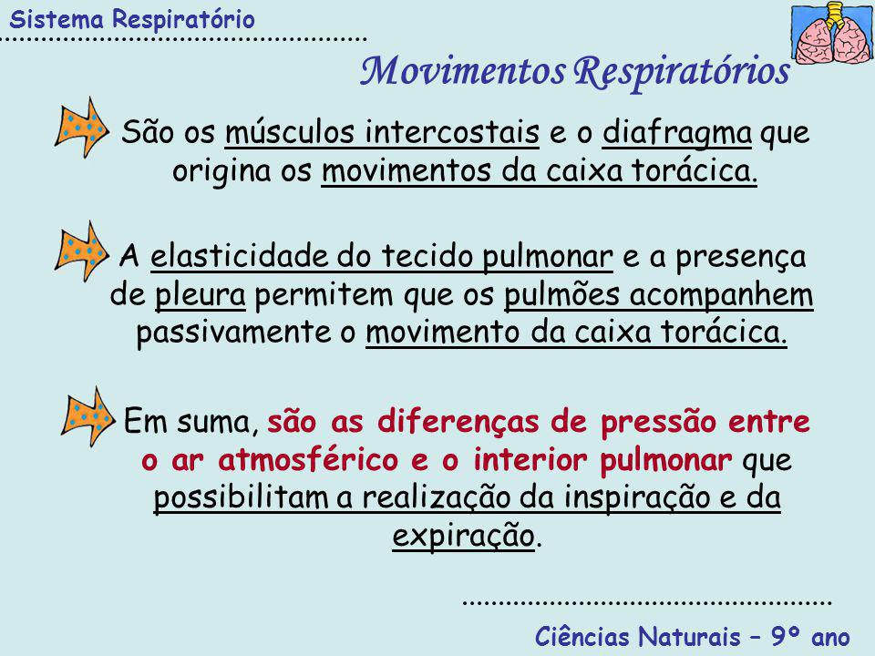 Movimentos Respiratórios Ciências Naturais – 9º ano