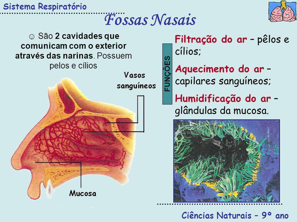 Ciências Naturais – 9º ano
