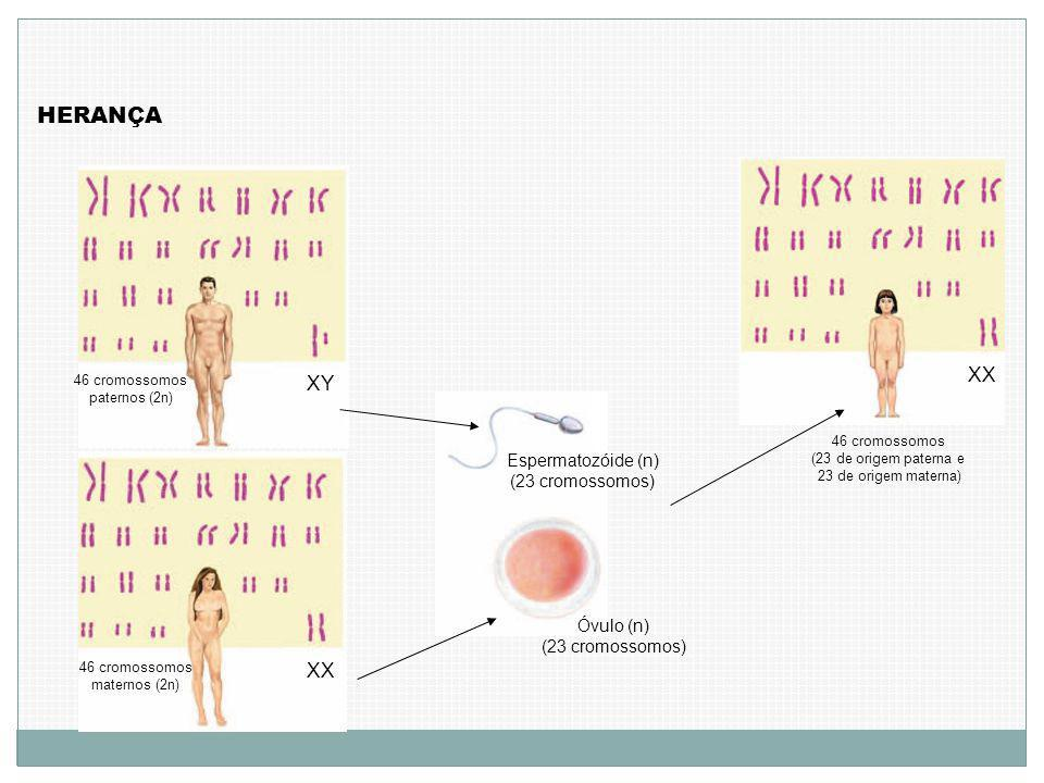 HERANÇA XX XY XX Espermatozóide (n) (23 cromossomos) Óvulo (n)