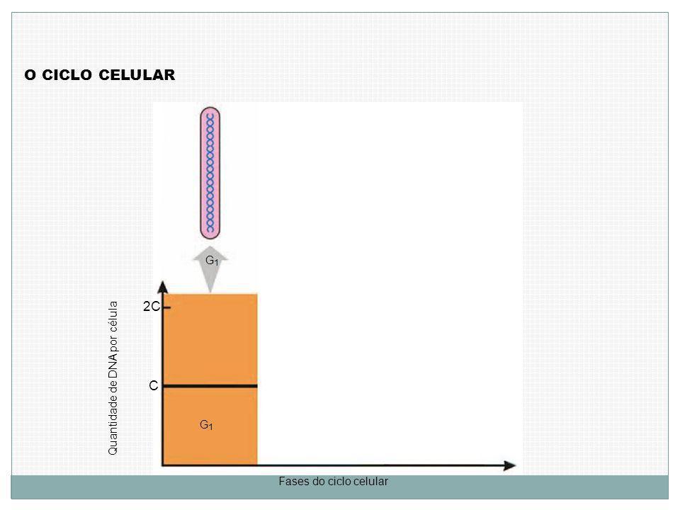 Quantidade de DNA por célula