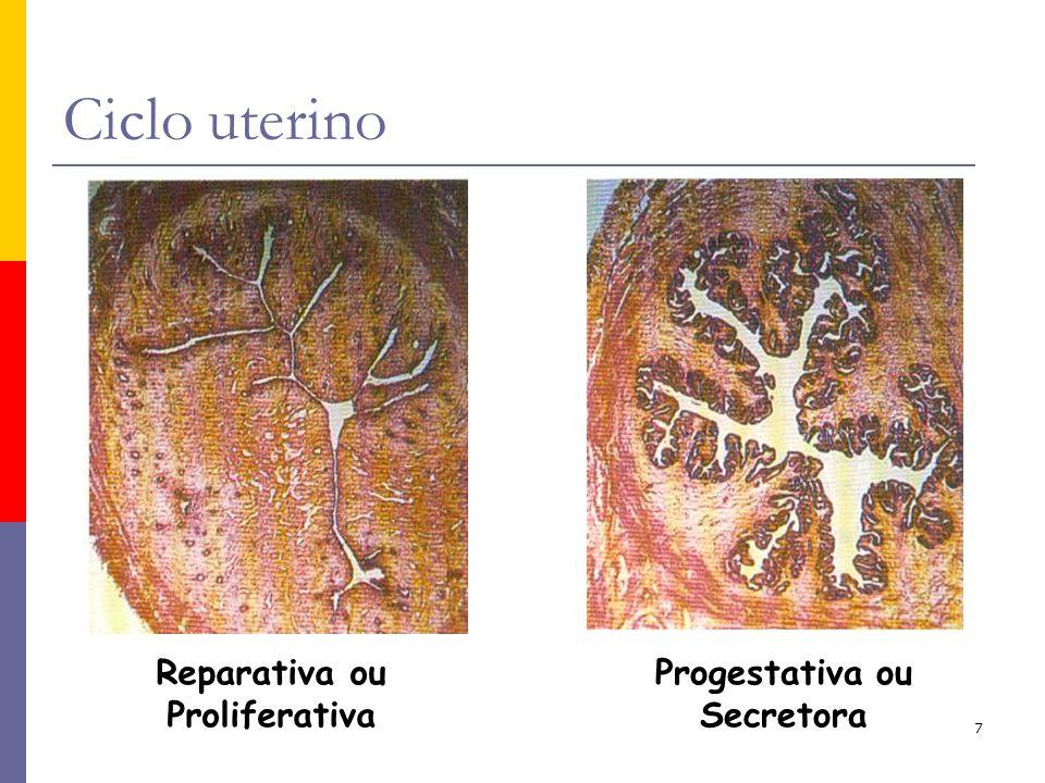 Reparativa ou Proliferativa Progestativa ou Secretora