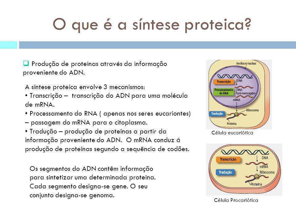 O que é a síntese proteica