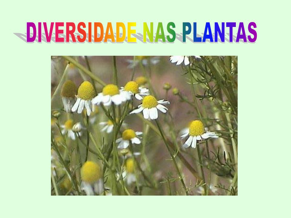 DIVERSIDADE NAS PLANTAS