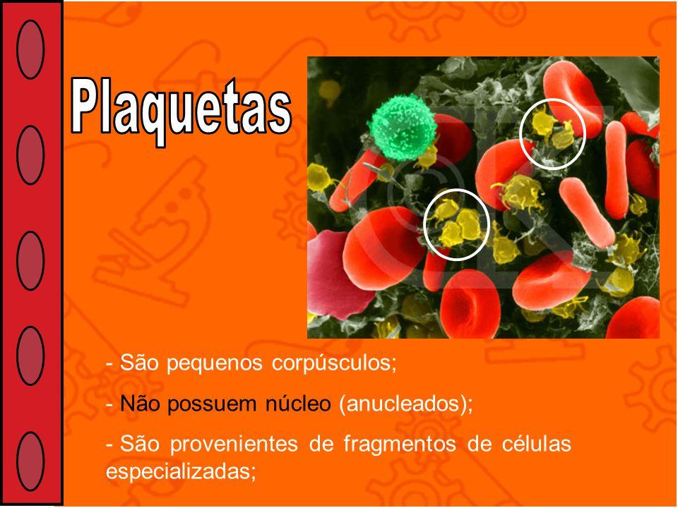 Plaquetas São pequenos corpúsculos; Não possuem núcleo (anucleados);