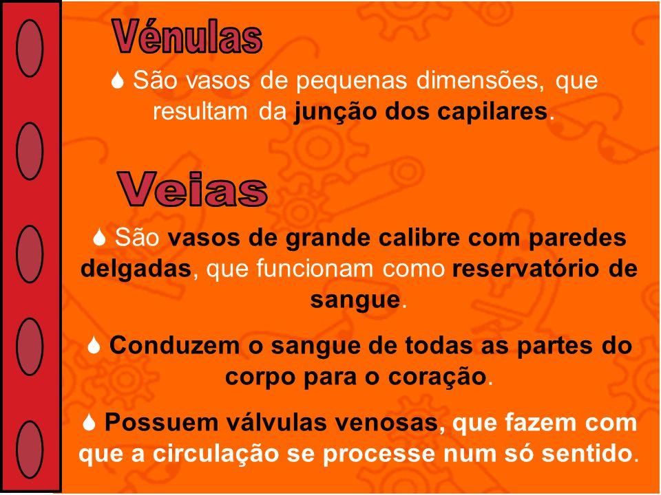 Vénulas São vasos de pequenas dimensões, que resultam da junção dos capilares. Veias.