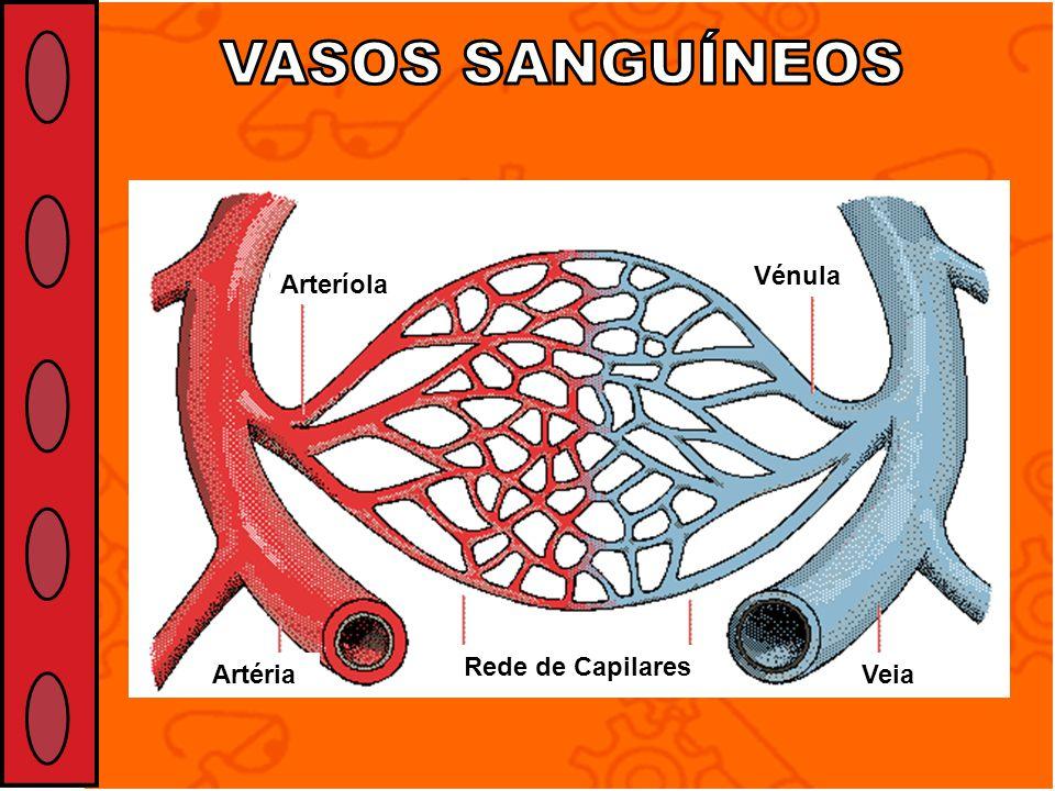 VASOS SANGUÍNEOS Veia Rede de Capilares Vénula Arteríola Artéria
