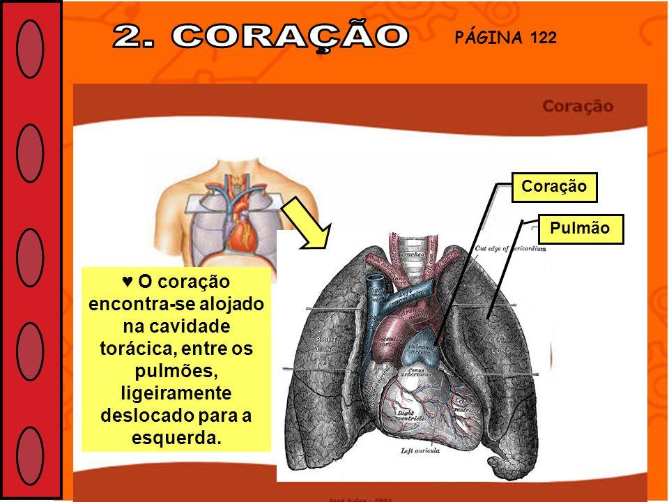 2. CORAÇÃO PÁGINA 122. Coração. Pulmão.