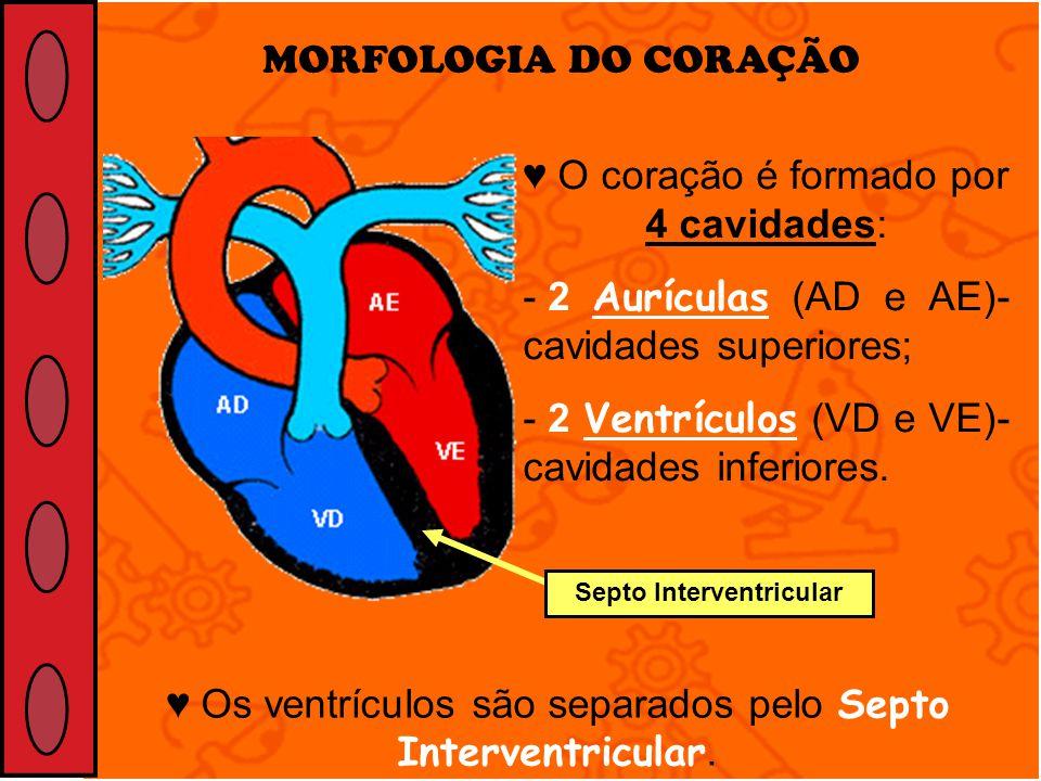 Septo Interventricular