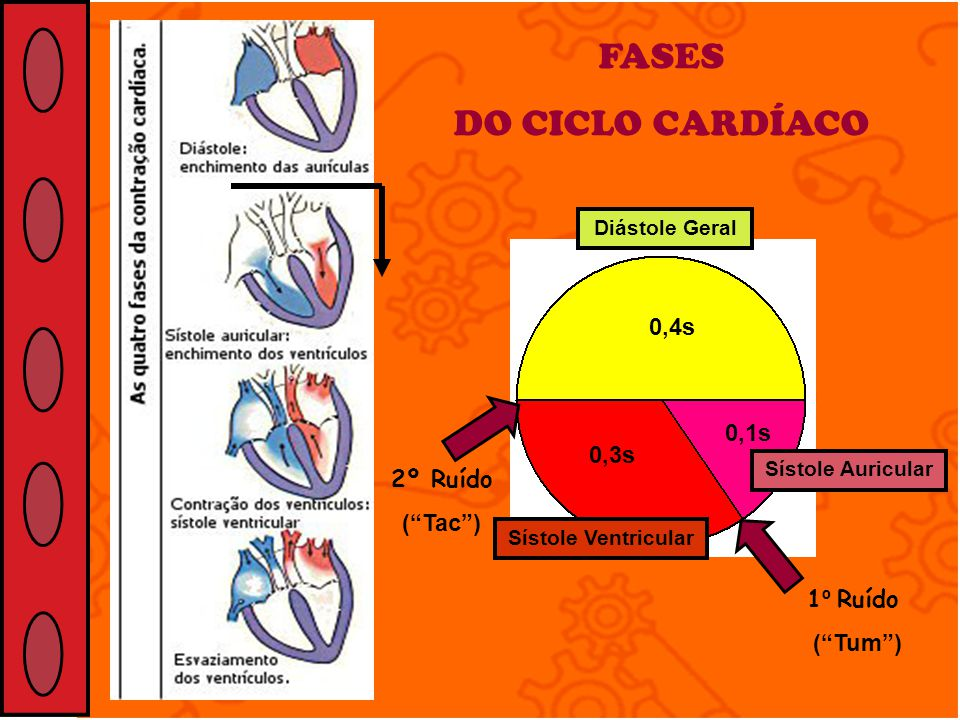 FASES DO CICLO CARDÍACO 0,4s 0,1s 0,3s 2º Ruído ( Tac ) 1º Ruído