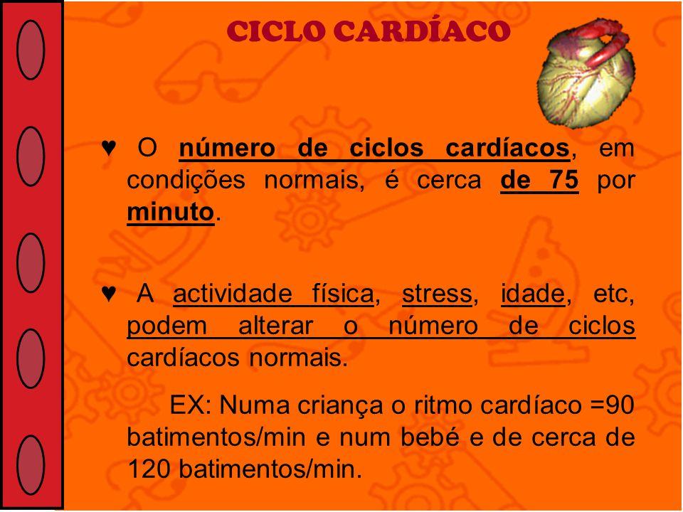 CICLO CARDÍACO ♥ O número de ciclos cardíacos, em condições normais, é cerca de 75 por minuto.