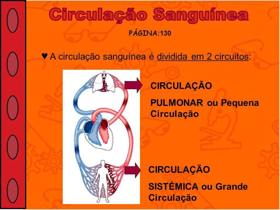 Circulação Sanguínea PÁGINA:130. ♥ A circulação sanguínea é dividida em 2 circuitos: CIRCULAÇÃO. PULMONAR ou Pequena Circulação.