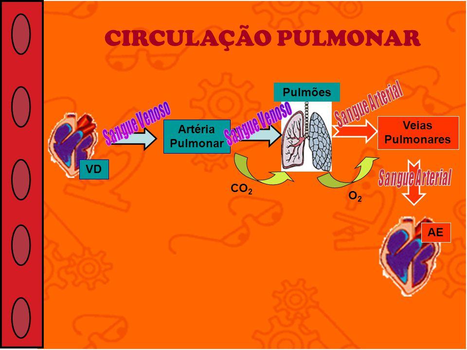 CIRCULAÇÃO PULMONAR Pulmões Veias Pulmonares Artéria Pulmonar VD CO2