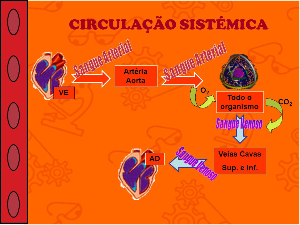 CIRCULAÇÃO SISTÉMICA Artéria Aorta O2 VE Todo o organismo CO2