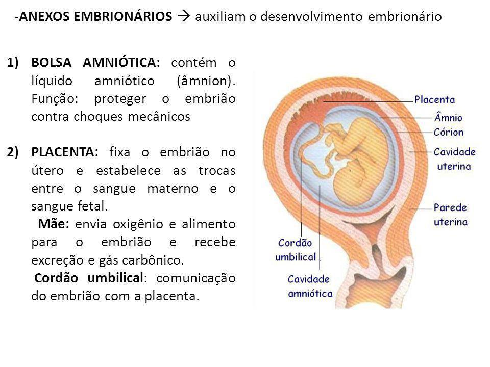 ANEXOS EMBRIONÁRIOS  auxiliam o desenvolvimento embrionário