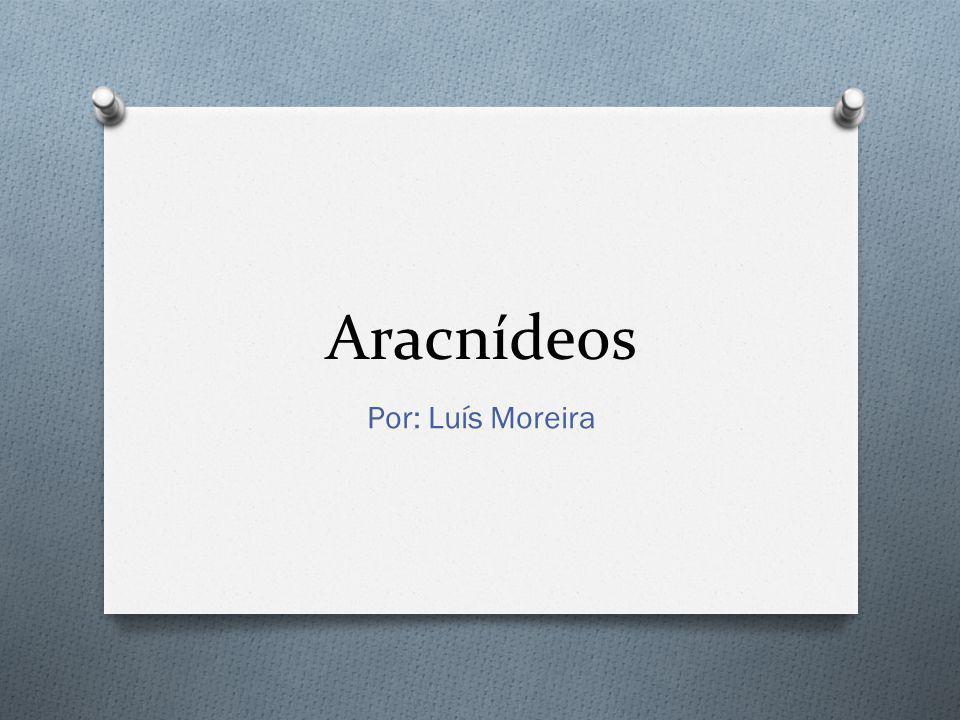 Aracnídeos Por: Luís Moreira